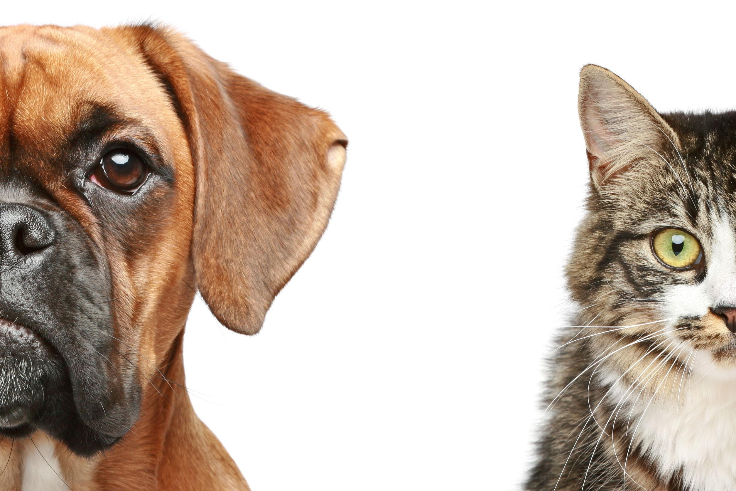 Savannah Humane Society (BOSS)