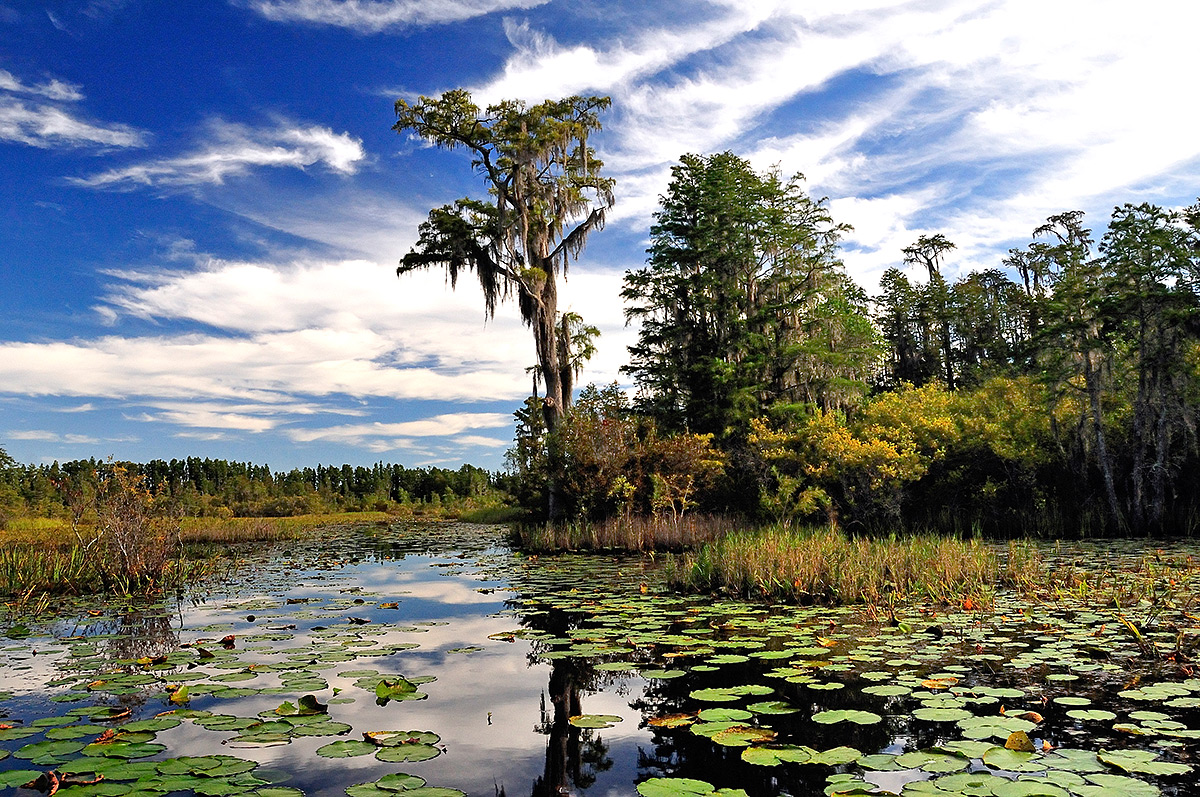 Okeefenokee Swamp Park Trip