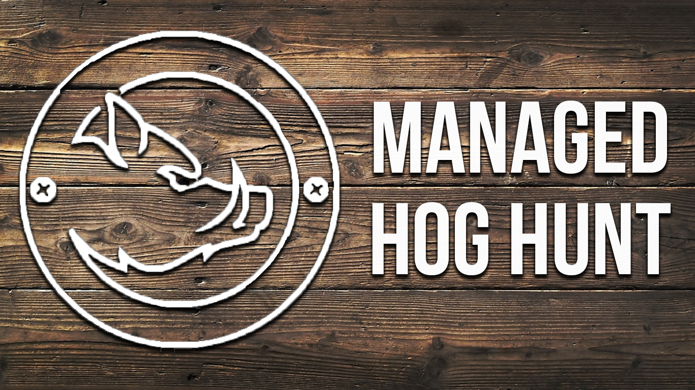 Managed Hog Hunt