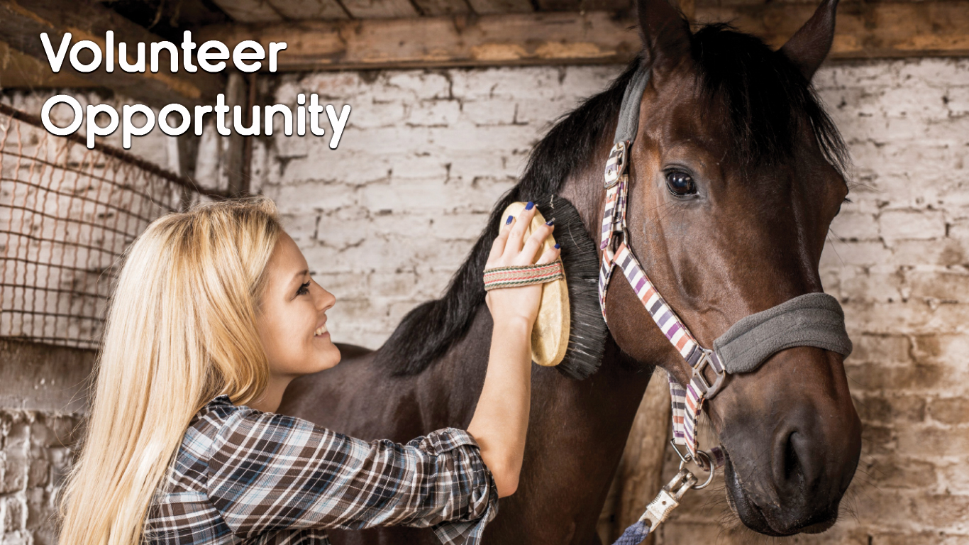 Second Chance Equine Center Volunteer Opportunity (BOSS)